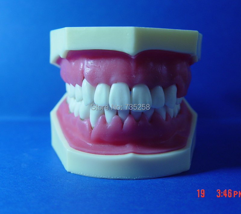 Advanced Periodontal Disease Model,Oral And Periodontal Disease Teaching Model зеркало evoform primary 50х60 см со шлифованной кромкой by 0006