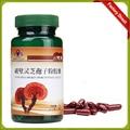 Protección de hígado ganoderma cápsula de extracto de hongo reishi