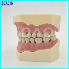 Dental Soft Gum Teeth Model Removable 28pc Teeth NISSIN 200 KAVO head model Compatible dental children removable deciduous teeth model permanent tooth alternative display studying teaching tool