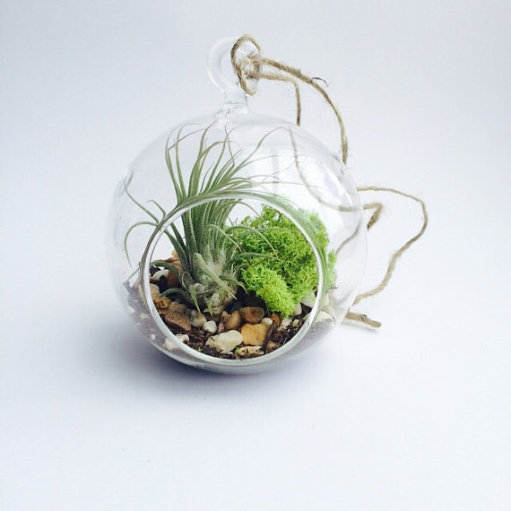Aliexpress.com : Buy 4 Inch Hanging Air Plant Globe Terrarium,4.5 inches/6  inch DIY Indoor Planter Vases With Air Plants,Moss,Succulent from Reliable  air ... - Aliexpress.com : Buy 4 Inch Hanging Air Plant Globe Terrarium,4.5