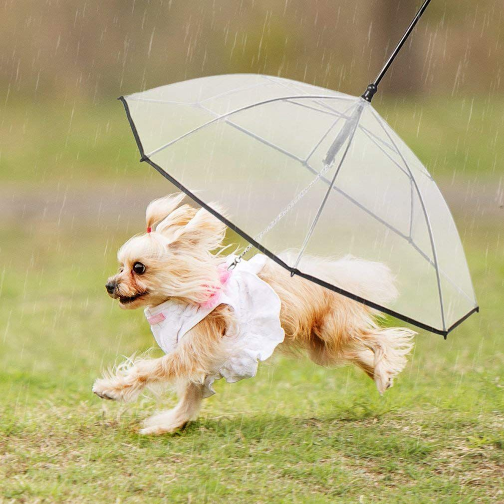 Pet Dog Umbrella With Leash - Easy View Clear Transparent Folding Puppy Umbrella for Small Dogs - Provides Protection from Rai Lahore