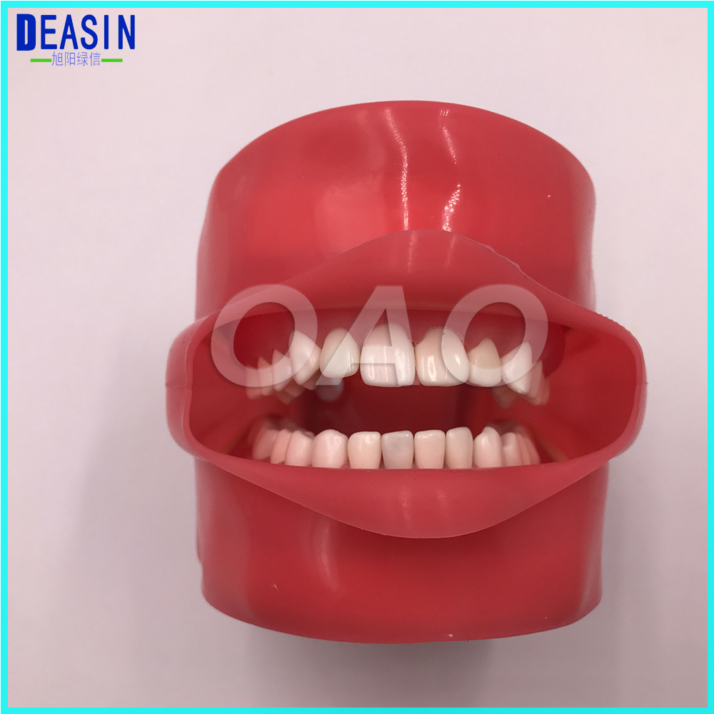 Dental Phantom Head for Dental School Teaching Model Standard tooth Model 28pcs Teeth Soft Gum Screw fixed DP Articulator promotion 24 pcs soft gum standard dental child model teeth fe articulator doctor teeth model a3
