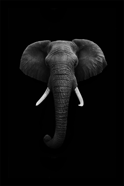 Custom canvas art elephant poster elephant wallpaper animals wall stickers christmas sticker mural bedroom decoration