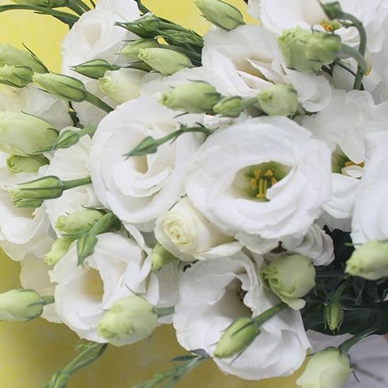ахименесы ризомы комнатные цветы на алиэкспресс