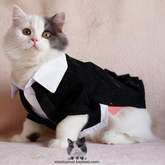 Small pet dog cat wedding tuxedo suit garment clothes party dog small pet dog cat wedding tuxedo suit garment clothes party dog puppy formal coat jacket clothing junglespirit Images