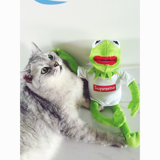 7cfe699f64f New Kermit Sesame Street Muppets Kermit the Frog with White T-shirt Toy  Plush 15