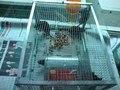 1 шт.  мышечная ловушка  непрерывная мышечная ловушка  мышечная клетка  ловушка для мыши  клетка для мыши  переработанная  очень прочная h16102