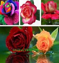 100 Rose Seeds 9 Packs Each Color 100 Seeds -DIY Home Gardening Pot Balcony & Yard Fragrant Flower Plant Bonsai Decoration