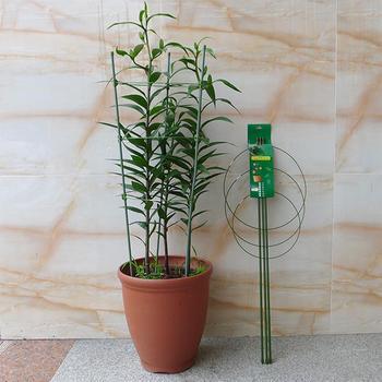Nie żelazny pierścień Liana roślinne podpórka doniczka Brace artykuły ogrodnicze-25 tanie i dobre opinie Steel pipe + plastic