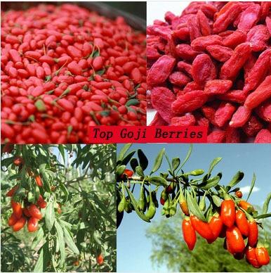 ягоды годжи купить