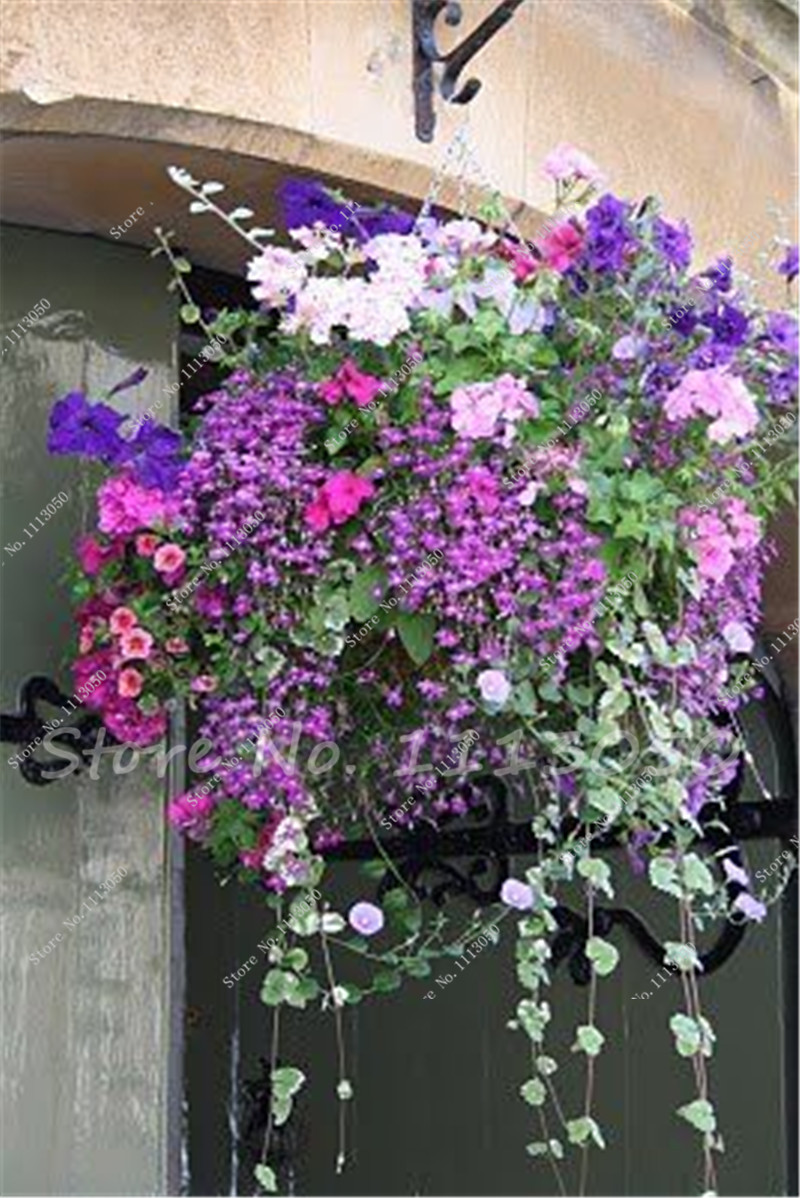 garden flowers seeds picture more detailed picture about new