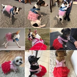 Image 3 - קיץ שמלת עבור כלב חיות מחמד כלב בגדי צ יוואווה חתונה שמלת חצאית גור בגדי אביב שמלות לכלבים ז אן בגדים לחיות מחמד XS L