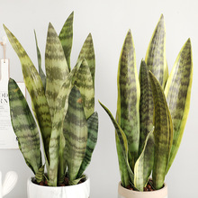 Fake Desert Plants Artificial Flower Sansevieria Trifasciata Simulation Succulent Agave Plant Home Office Shop Garden Decor