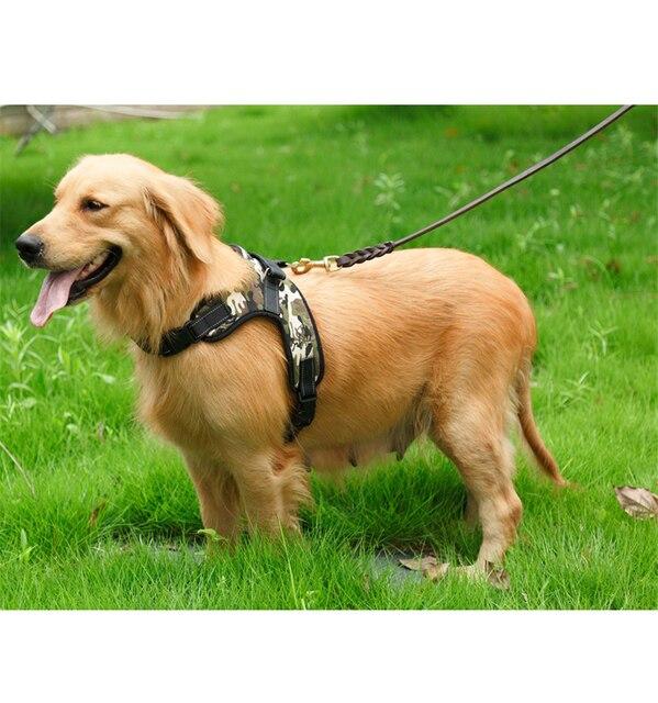 Dog's Harness