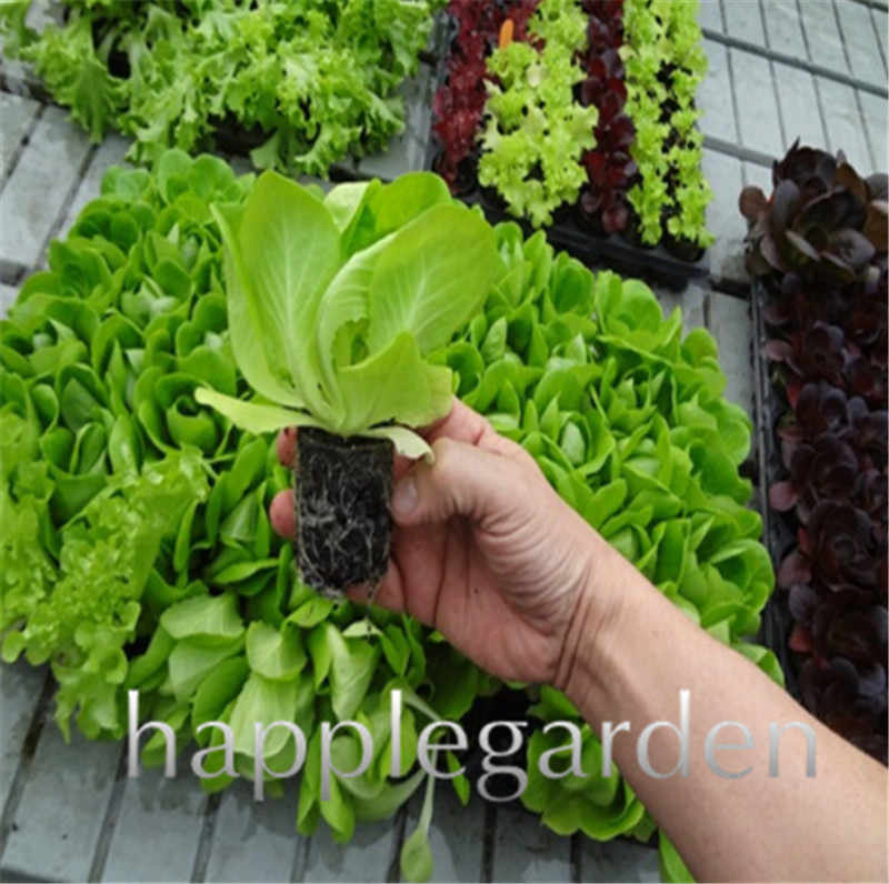 2019 Promotion 500 Pcs Outdoor Plants Very Easy Grow Lettuce bonsai Mini Garden Vegetable plants Diy Plant Free shipping