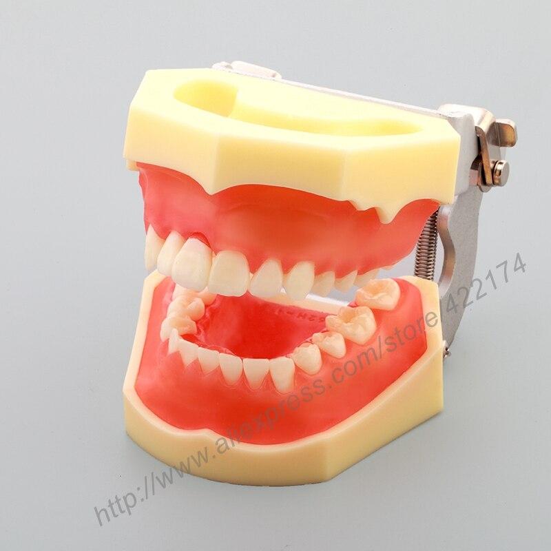 Niedlich Anatomie Des Mundes Und Der Zähne Zeitgenössisch ...