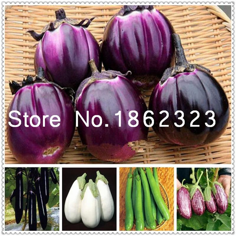 200 stk. Lilla runde aubergine bonsai, økologisk grøntsag, blomsterpotte haven frugt og grøntsager Bonsai til haven