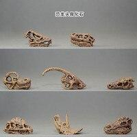 small Triceratops dinosaur skull model Tyrannosaurus rex skull model, 8pcs/set