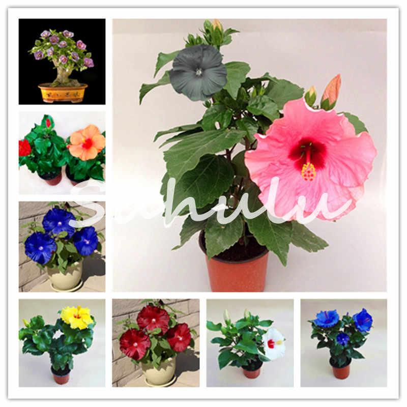 Promosyon! 120 adet/torba Univalve Sardunya Bonsai Çok Yıllık Çiçek Bahçe Pelargonium Peltatum Bitki Odaları Için, Doğal Büyüme