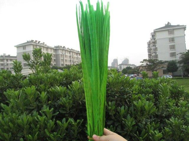 شحن مجاني 100 pcst الأخضر مصبوغ الدراج الريش 50 55 سنتيمتر 20 22 بوصة الدراج ريش الذيل-في ريشة من المنزل والحديقة على  مجموعة 1