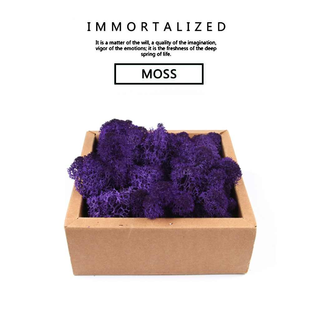 500g Multicolor Moss Never withers Insurance Flowers Immortal flowers DIY Floral materials Microscopic bonsai
