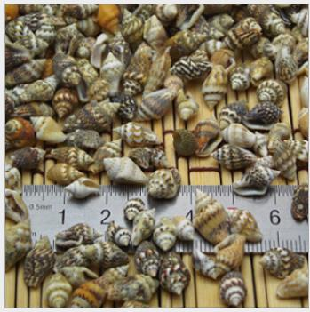100pcs/Lot 0.9-1.5 Cm Small Miscellaneous Conch Home Decoration Material Natural Craft Seashell Aquarium Fish Tank Landscape