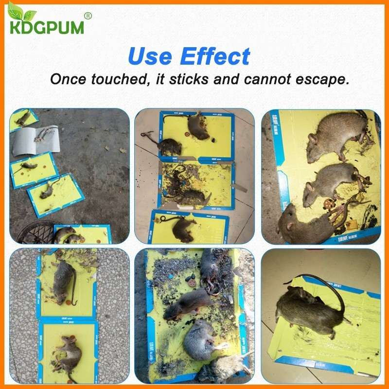 21x30CM Non Toxic Mouse Trap with Strong Glue to Stick Rats and Insects for Pest Control 5