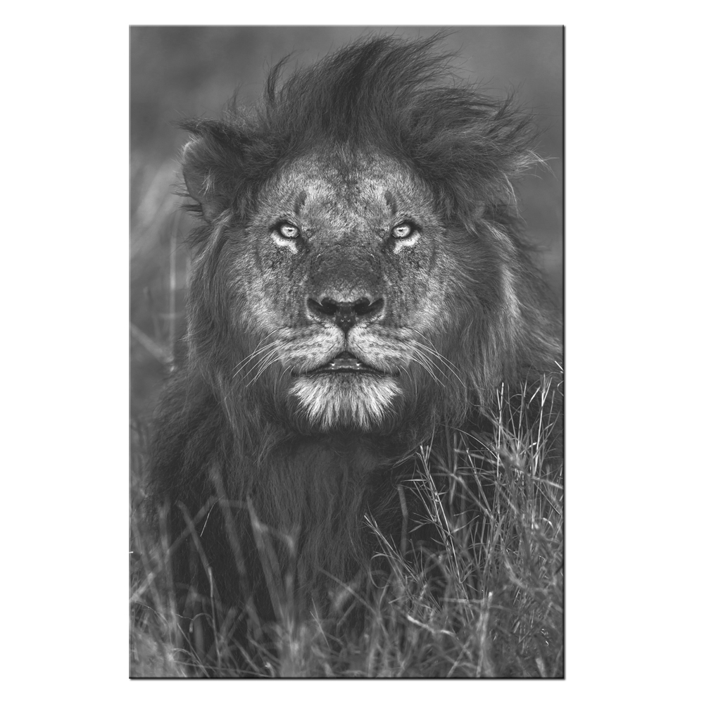 Us 18 98 black white animal portrait painting lion canvas wall art decorations for living room hd picture contemporary giclee artwork in painting