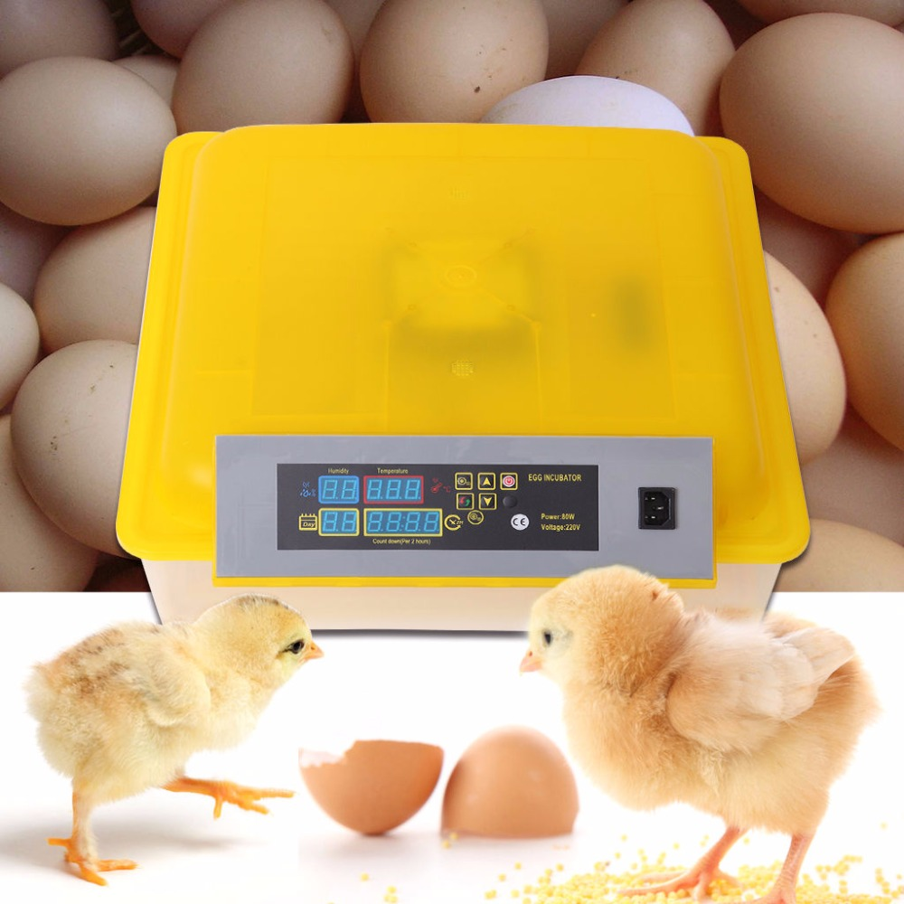 (Ship from Germany) 48 Eggs Incubator Chicken Auto Turning Hatcher Temperature Humidity Gift nanchang huatuo industrial company sale humidity and temperature controller 24 6336 chicken eggs