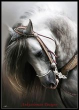 Embroidery Counted Cross Stitch Kits Needlework - Crafts 14 ct DMC color DIY Arts Handmade Decor - Andalusian Horse(China)