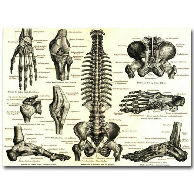 Tienda Online Anatomía Humana hueso sistema esquelético arte seda ...