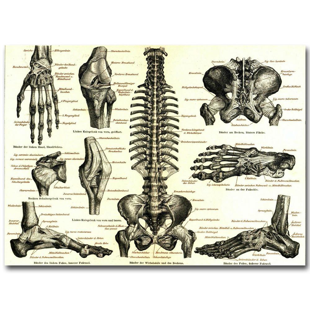 Menschlichen Anatomie Knochen Skelettsystems Art Silk Tuch Plakat ...