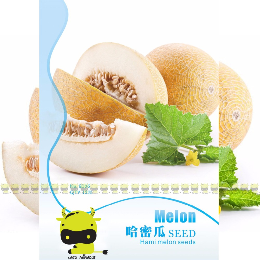 Super Big Sweet honey-dew melon Seeds Hami melon Fruit Seeds, 8 Seeds(1 Original Pack), Heirloom Succulent Plants