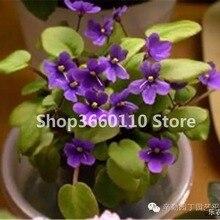 Big Sale 100 Pcs Variety Of Colors Violet bonsai Garden Plants Flowers Perennial Herb Matthiola Incana plant Flor Bonsai