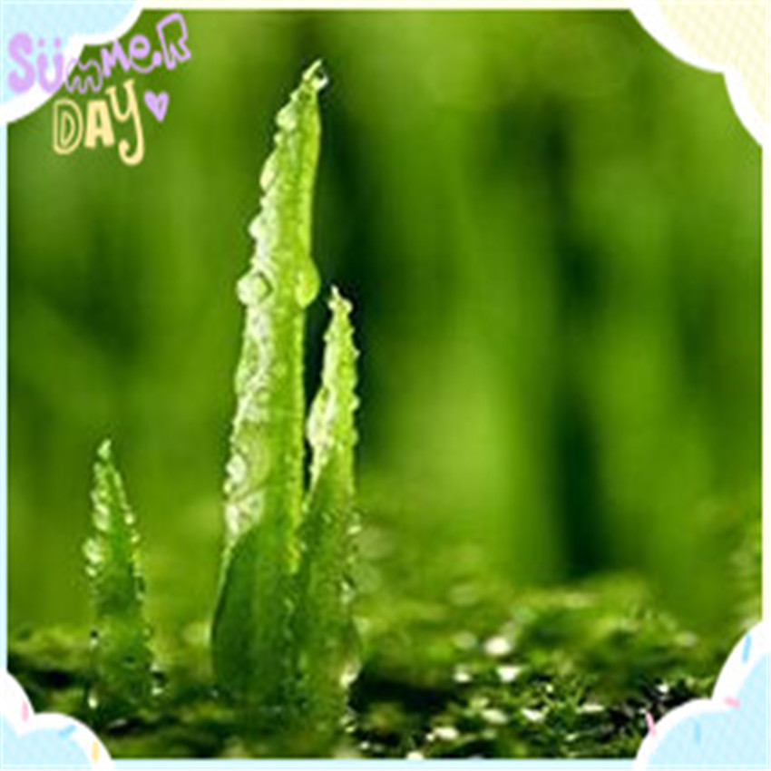 Skin-Protective Pure Natural Organic Aloe Vera Spray Dried Powder