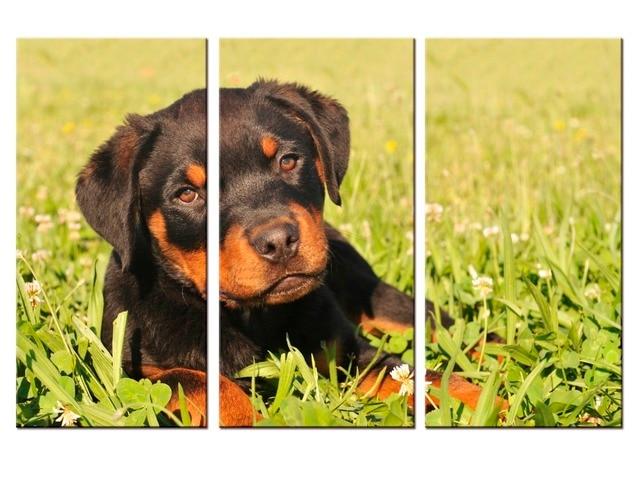3 pieces / set canvas Art new Cute Dogs Animals Canvas Print ...
