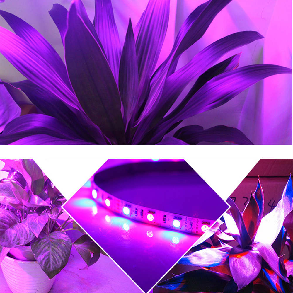 5Meter 5050 LED Strip Plant Grow Lights DC12V 300leds 3:1 4:1 5:1 Red Blue light for Greenhouse Hydroponic Full Spectrum IP20 IQ
