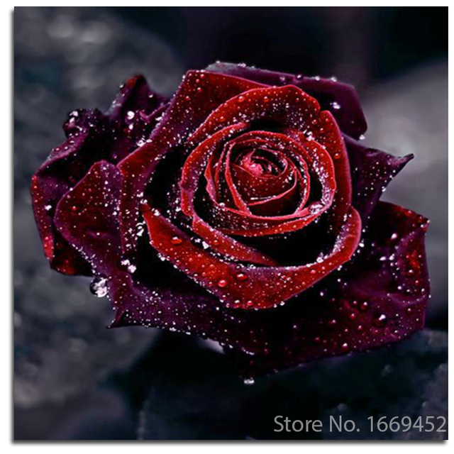 aliexpress com buy 5d diy embroidery diamond roses canvas