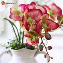 Pink Phalaenopsis Orchid Seeds Flower Seeds Indoor Bonsai Orchids 100 particles / lot