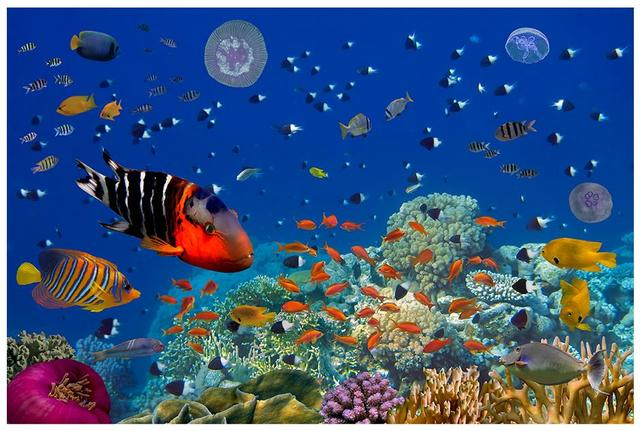 Custom 3d wallpaper for walls 3 d wall murals wallpaper for Aquarium mural gifi