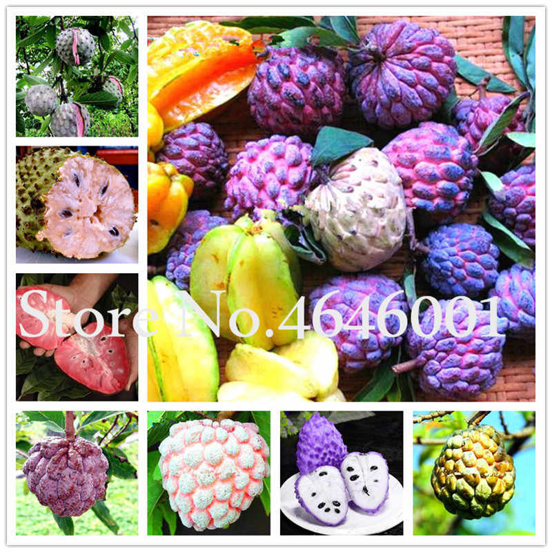 Sale! 10 pcs/bag Rare giant Graviola Soursop bonsai Guanabana Annona Muricata Tropical fruit tree sweetsop plant for home garden
