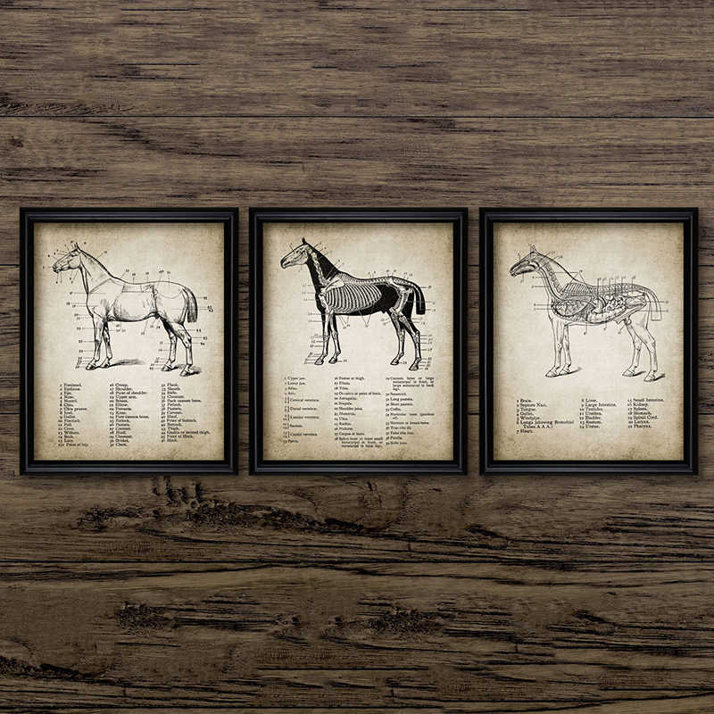 Vet Definition Print Veterinarian Gift Modern Veterinary Wall Art Picture Canvas Painting Black White Poster Vet Office Decor Painting Calligraphy Aliexpress