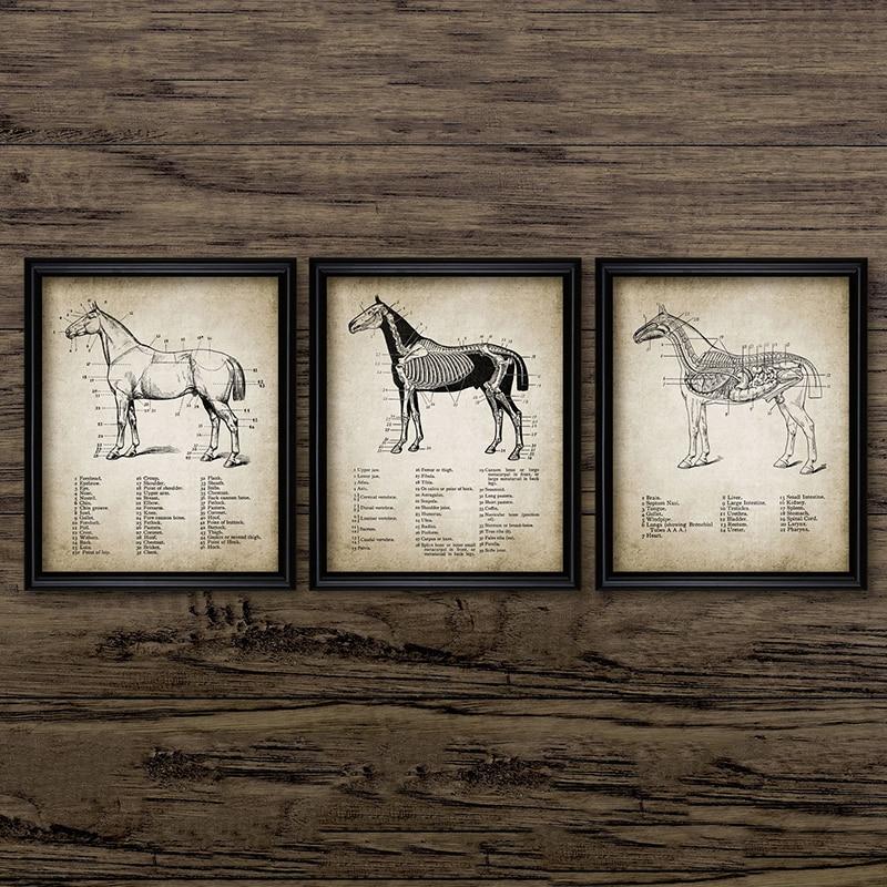 Винтажные холщовые постеры с изображением лошади, настенная живопись с иллюстрациями по анатомии лошади, картины для конного спорта, домаш...