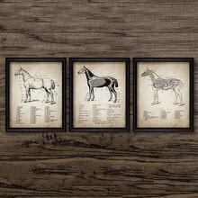 Tela de anatomia do cavalo do vintage, tela impressa de cavalo, anatomia e pintura de parede, imagens questrianas, decoração da parede