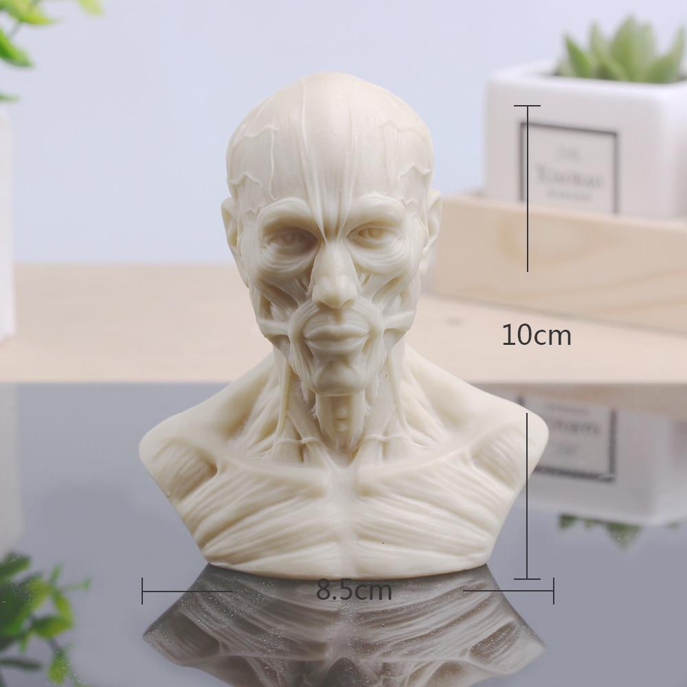 Escultura Músculo-esqueléticas Crânio Busto Pequeno Prática Esboço Gesso Resina Decoração da Casa de Arte e Artesanato Decoração Do Escritório