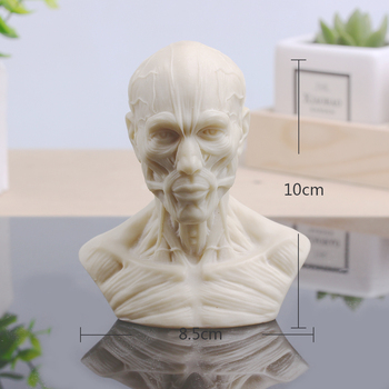 Sculpture Musculoskeletal Skull Bust Small Plaster Home Decoration Resin Art and Craft Sketch Practice Decoration Office