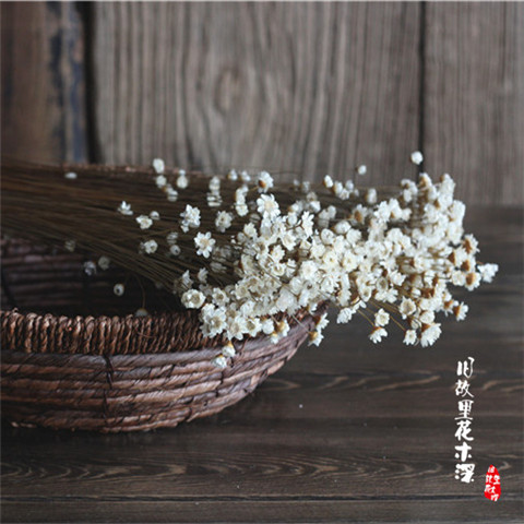 30 Pcs Star Ferry Chrysanthemum Decorative Dried Flowers Household Decoration Flower Arranging Shooting Props White Little