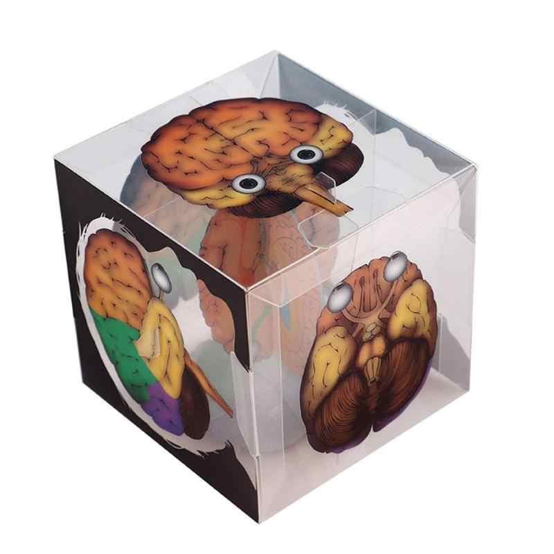 Mainan Anak Manusia Anatomi Model Anatomi Laser Terukir Otak Kaca Kristal Cubo Anatomia Anatomi Neurologi Mainan Pendidikan