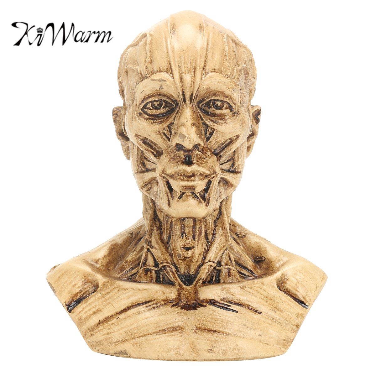 Kiwarm nuevo 4 \