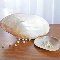 22CM Natural Pearl Shells Home Decoration Peeling Seashell Valentine's day Gifts Aquarium Ornaments Fish Tank Landscape